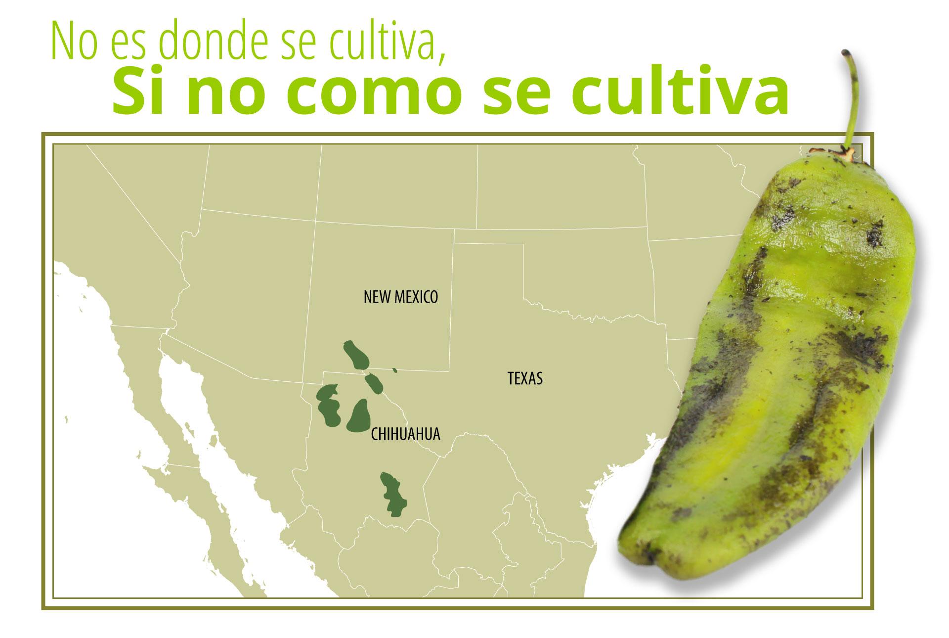 chile chilaca mapa